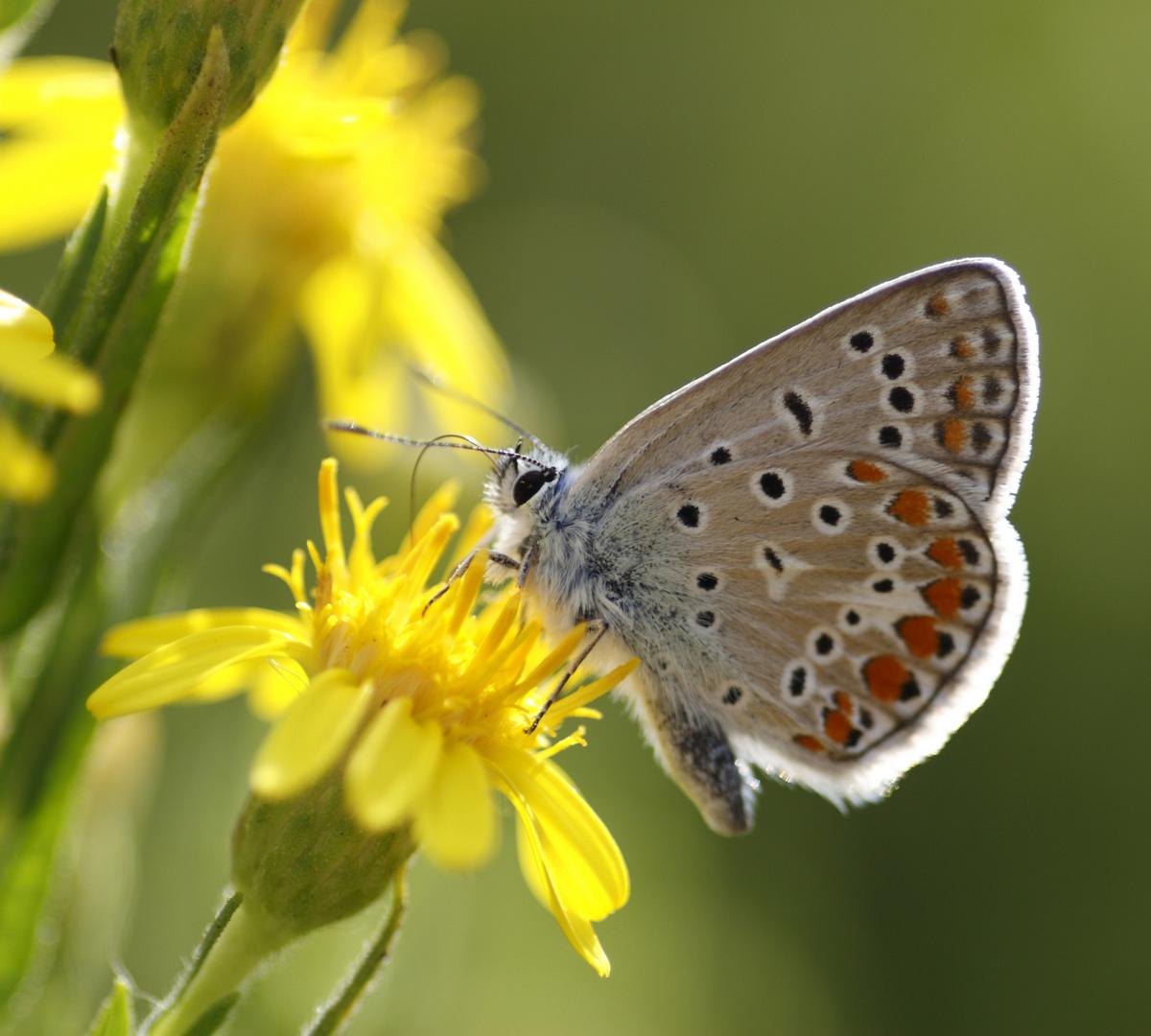 Schmetterling in der Toskana