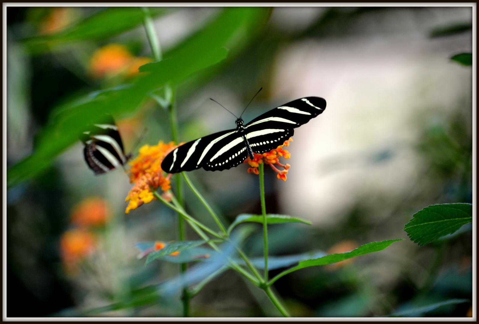 Schmetterling in der Wilhelma Stuttgart