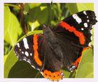 Schmetterling in Herbstsonne