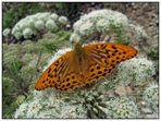 Schmetterling in schöner Umgebung