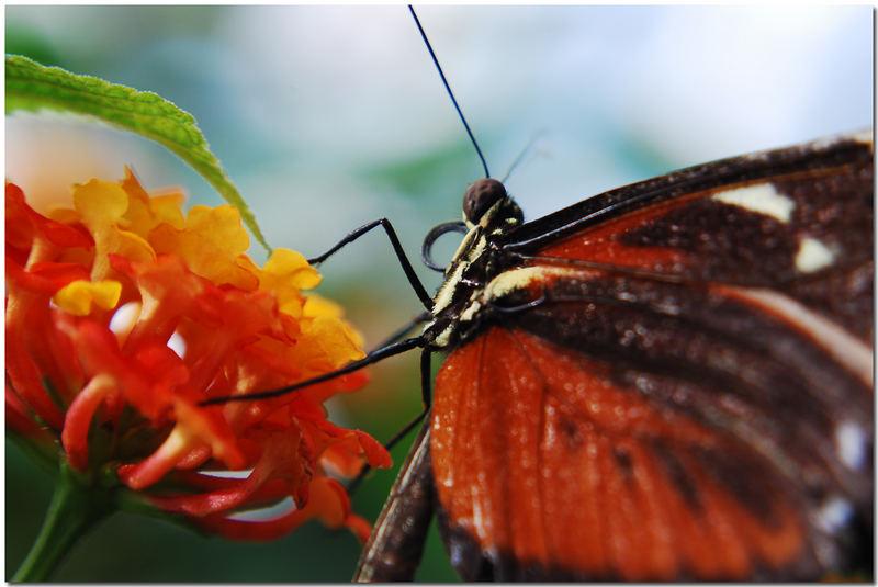 *Schmetterling in Schräglage*