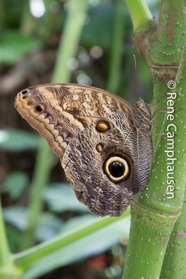 Schmetterling - Insel Mainau 04/2015