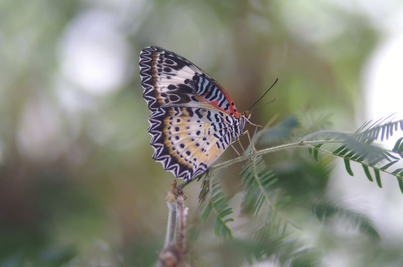 Schmetterling Insel Mainau
