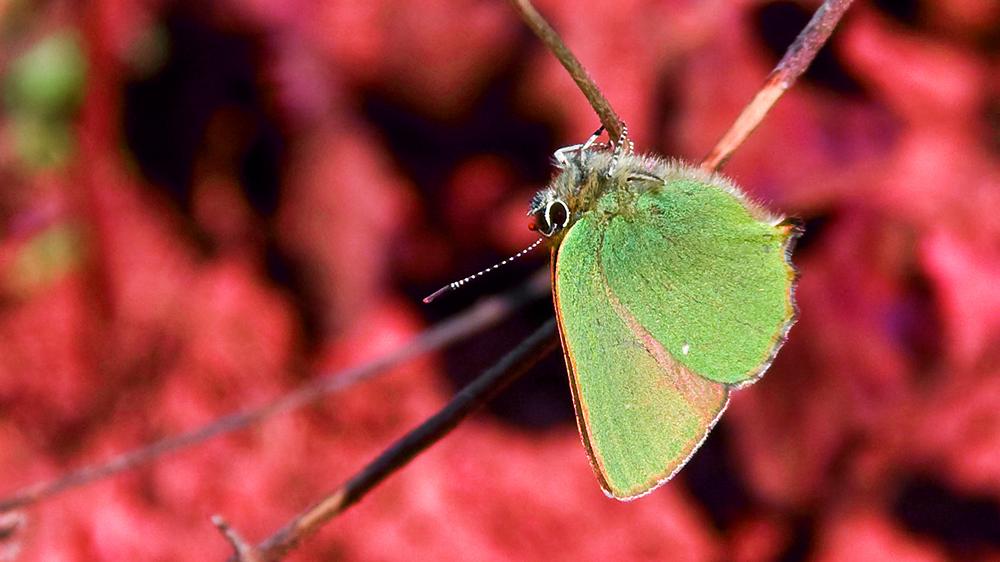 Schmetterling kopfüber (-: