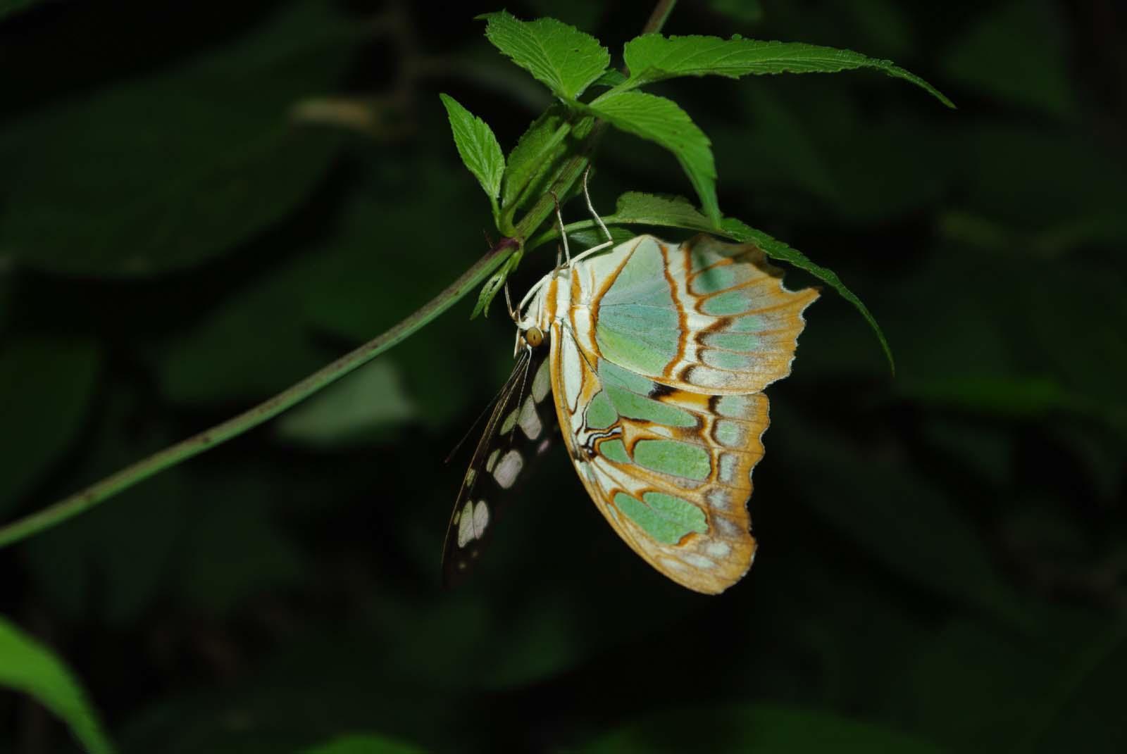 Schmetterling kopfüber.. oder eher unter
