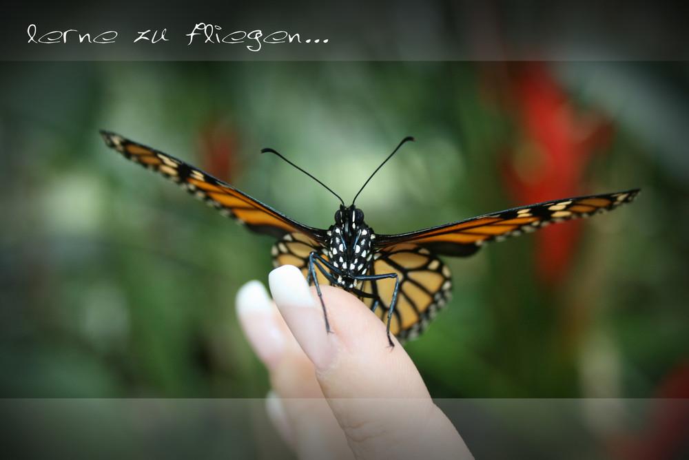 Schmetterling-learn to fly...