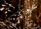 Schmetterling — Leichtgebilde aus Licht und Freude