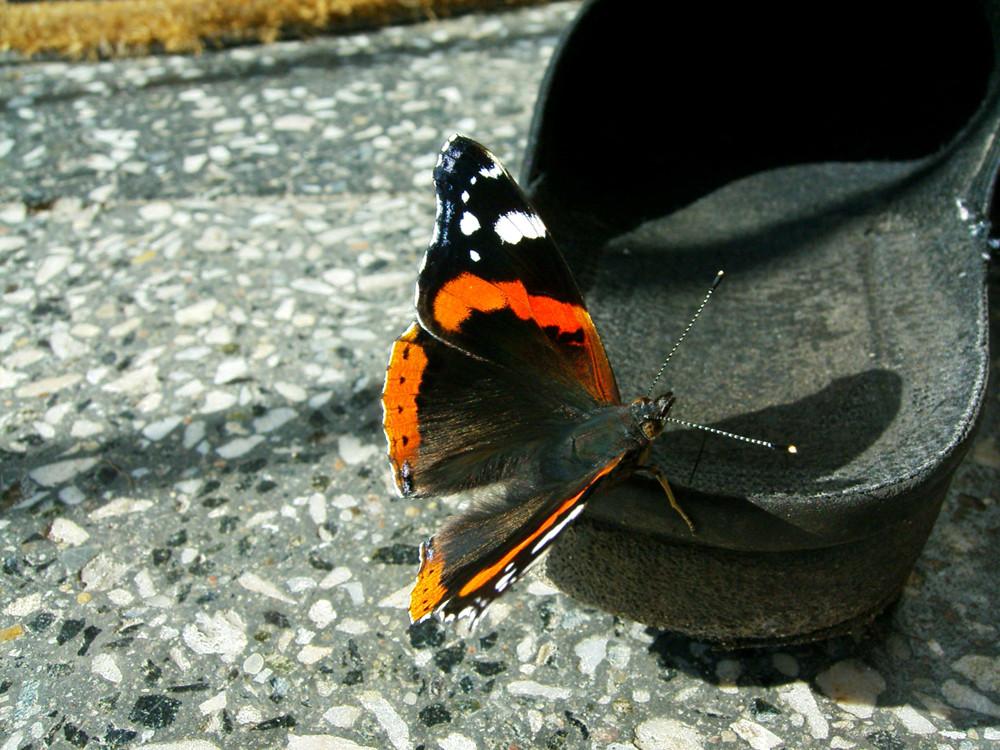 Schmetterling mit Schuh