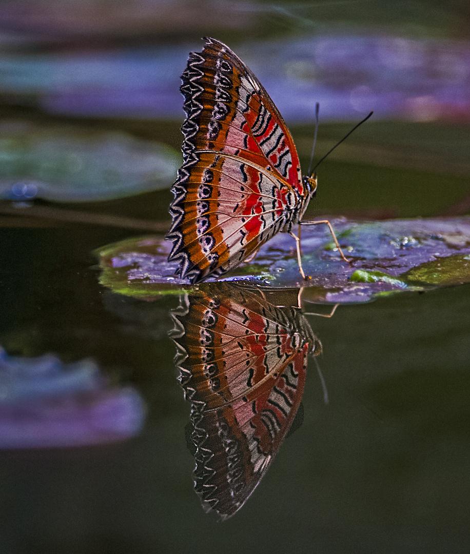 Schmetterling mit Spiegelung