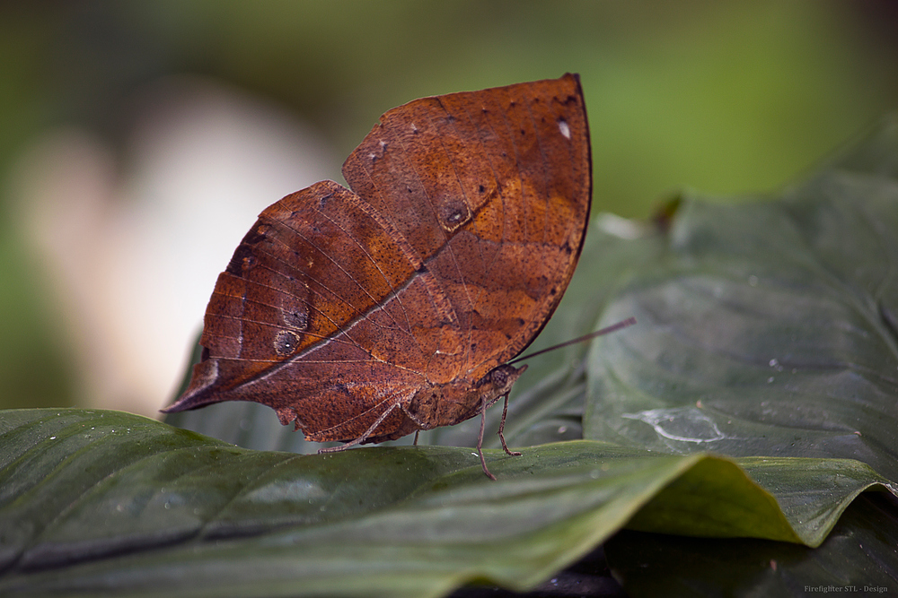 Schmetterling Nr.16