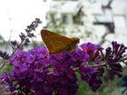 Schmetterling oder son Vieh