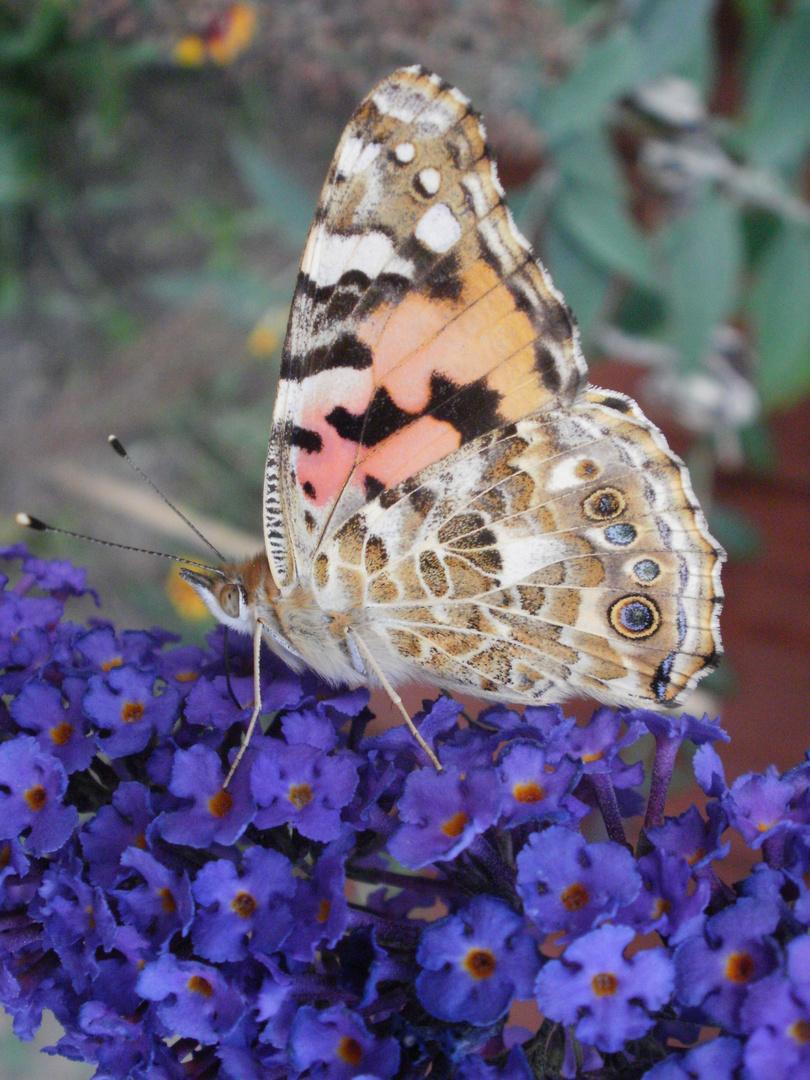 Schmetterling Schmetterling