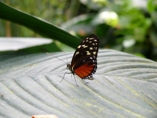 Schmetterling Teil 2