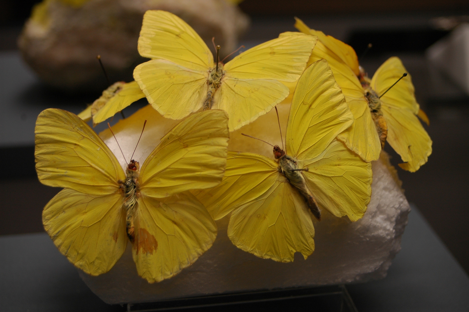 Schmetterling trifft Terra Mineralia...
