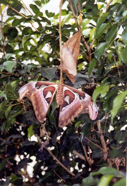 Schmetterling und Entwicklung