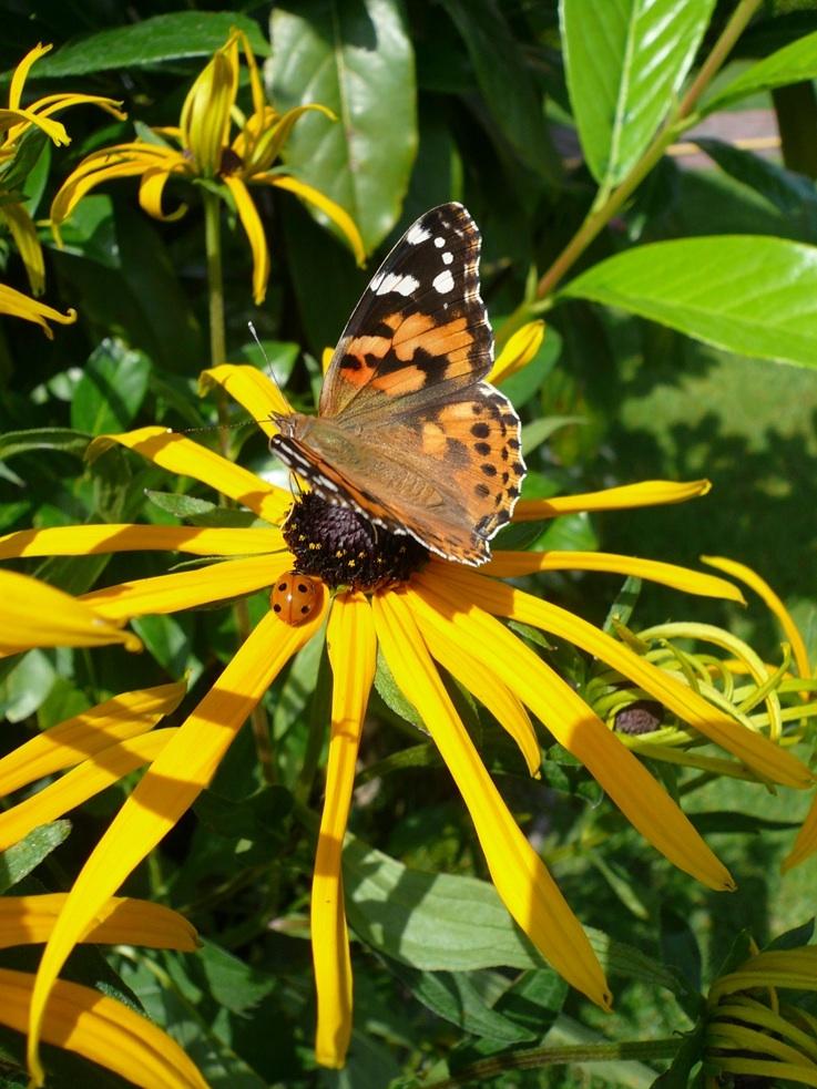 Schmetterling und Motschekiebchen