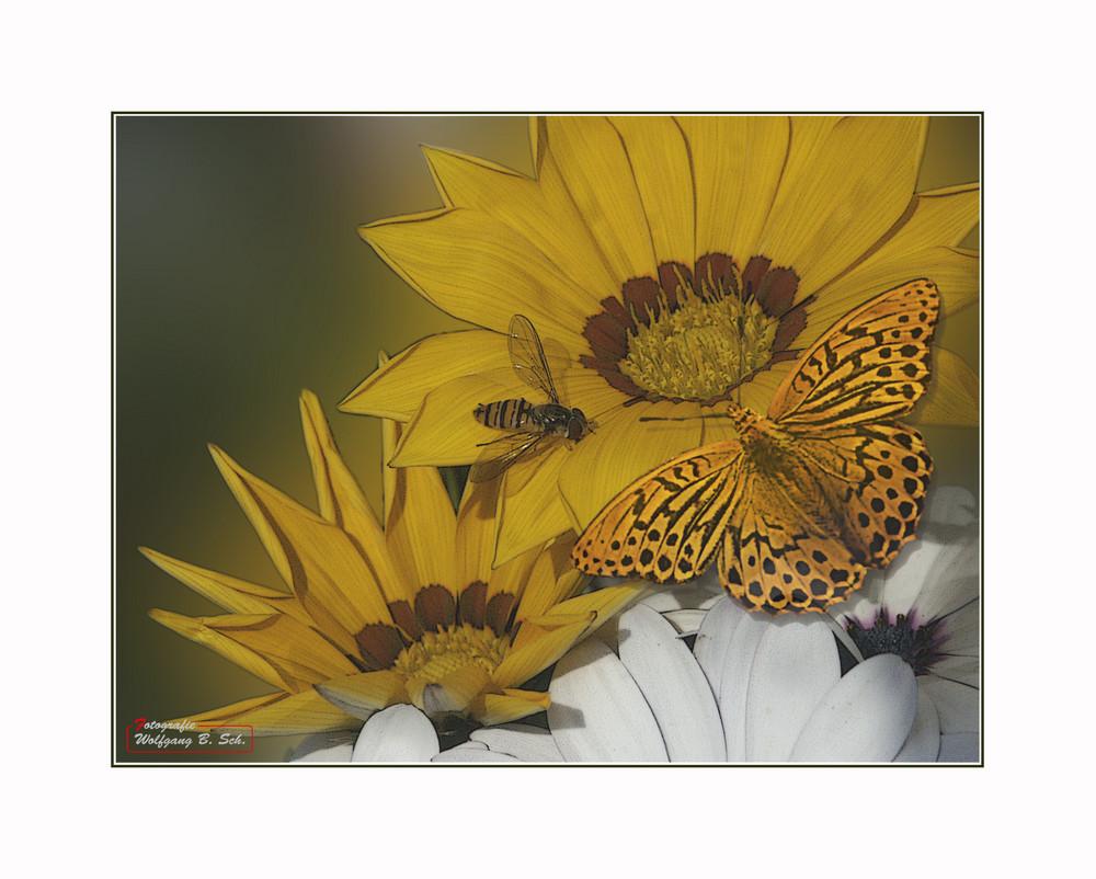 Schmetterling und Schwebefliege