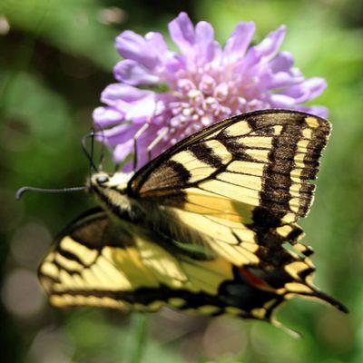 Schmetterling unter kurzer Belichtung