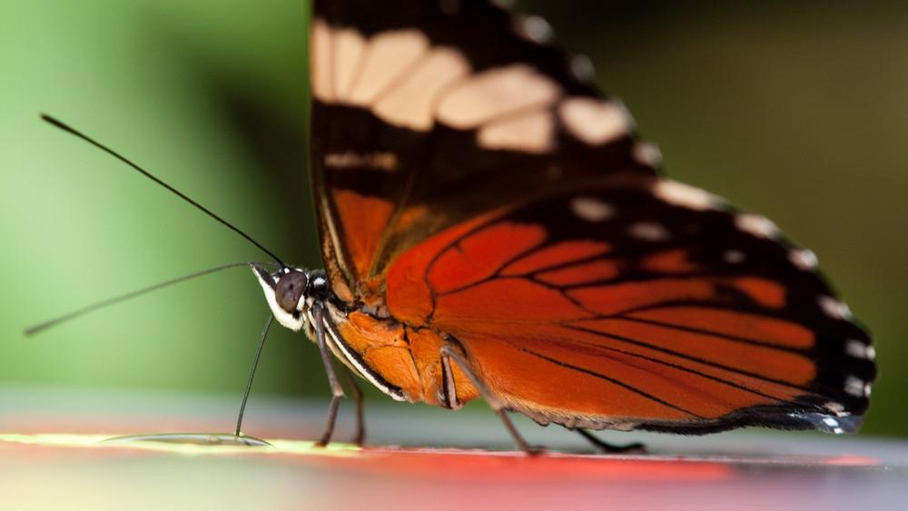 Schmetterling - was auch immer für einer