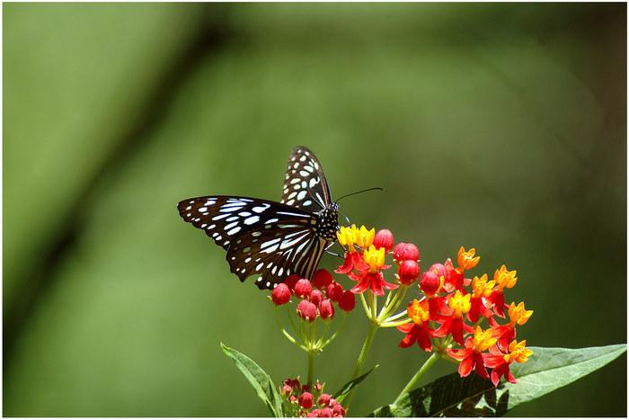 Schmetterling, welche Art ... gute Frage