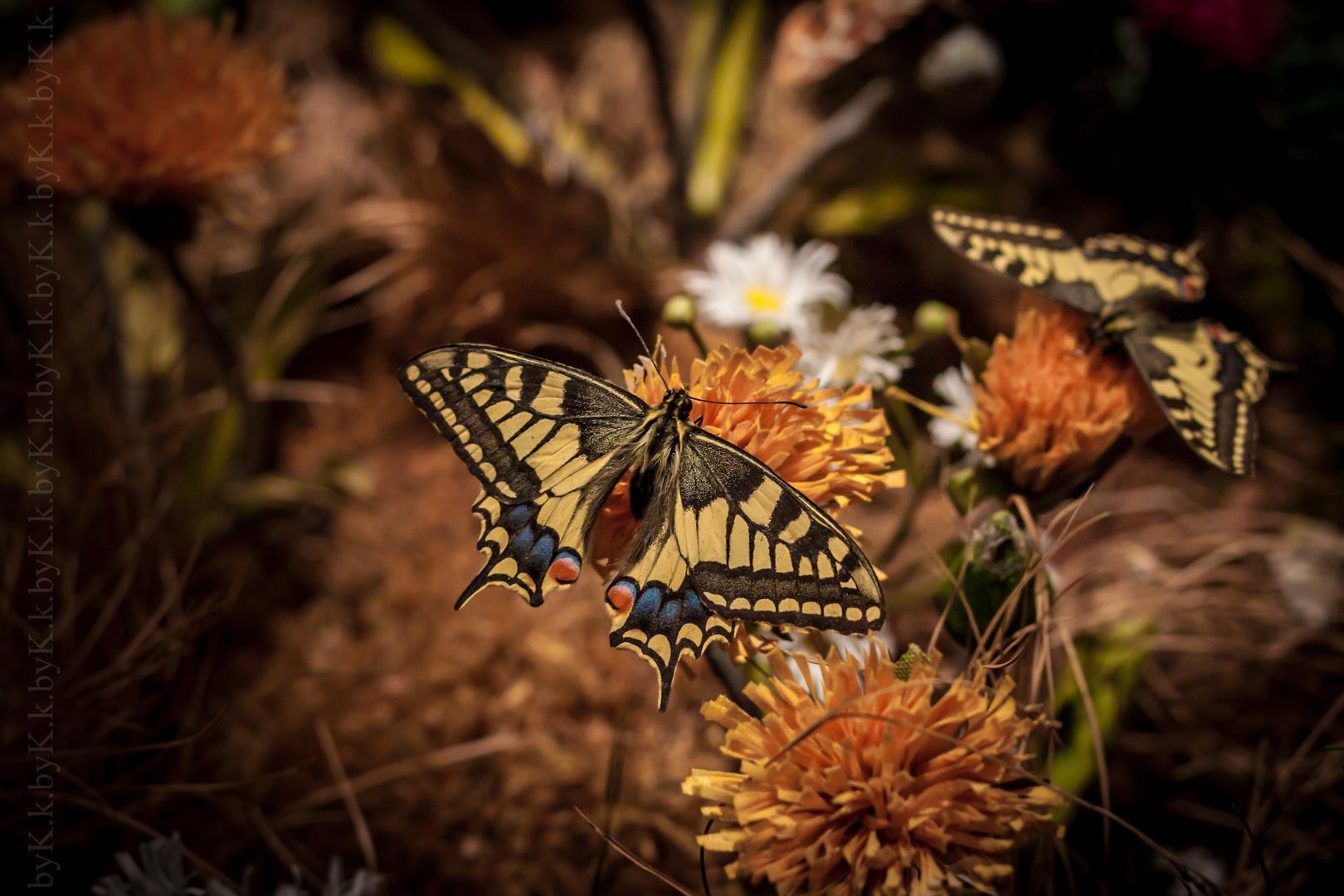 Schmetterling Zoo Schmiding