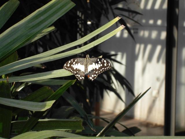 Schmetterling Zoo Stuttgart