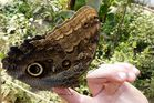 Schmetterling - zutraulich oder neugierig?