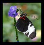 Schmetterlinge....