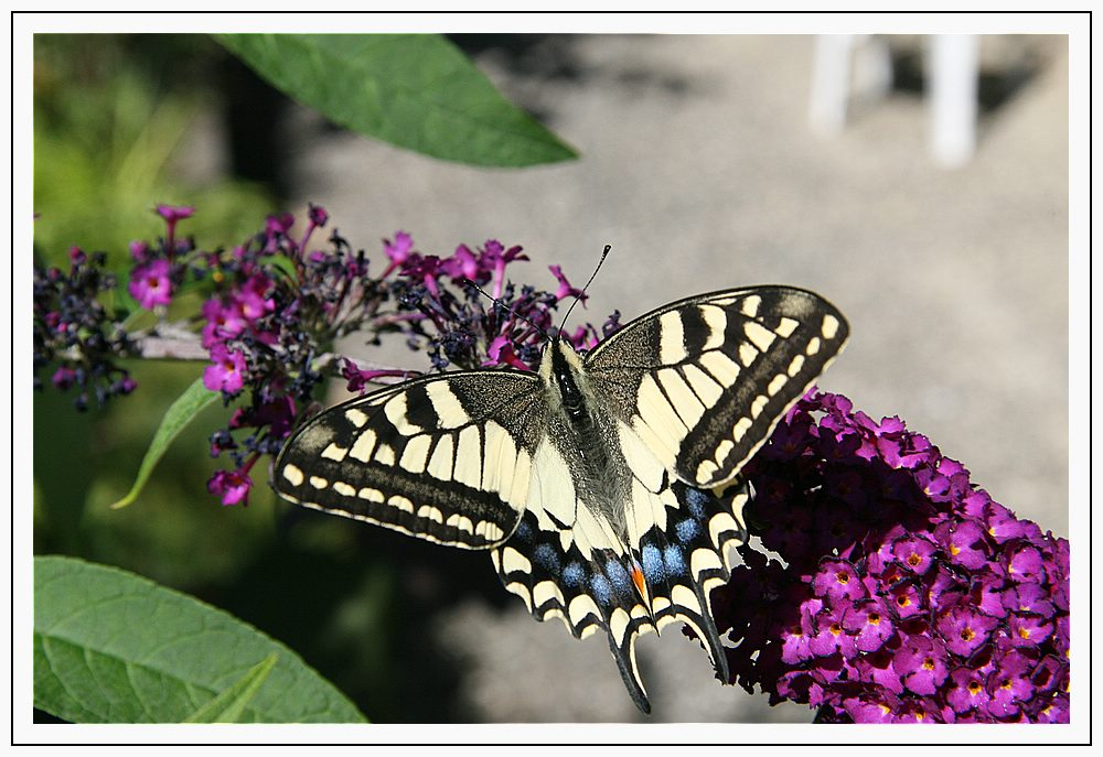 Schmetterlinge 3