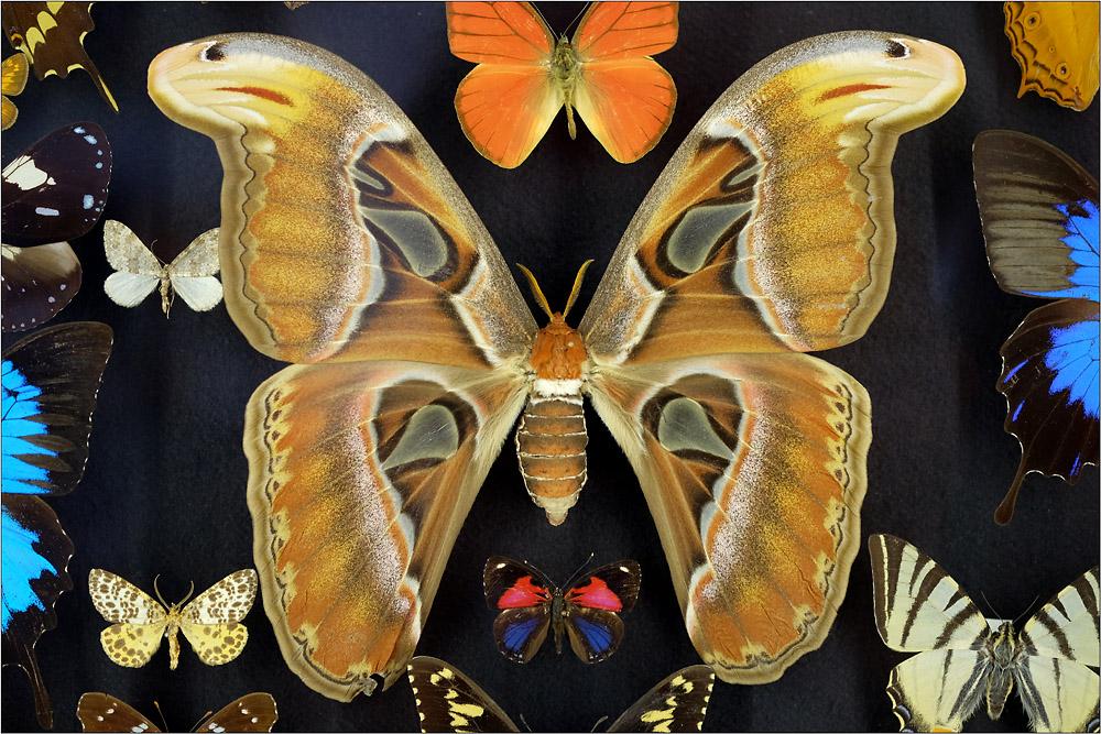 Schmetterlinge...