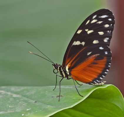Schmetterlinge #5