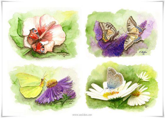 Schmetterlinge / Aquarell Zeichnungen