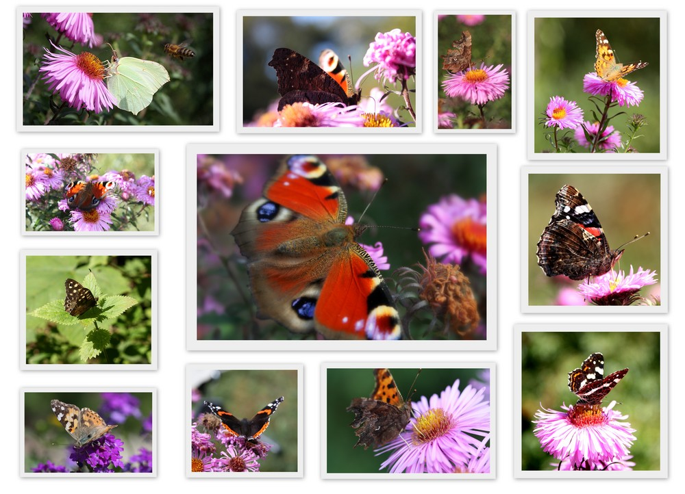 Schmetterlinge ...
