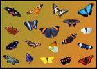 Schmetterlinge, die mir dieses Jahr vor die Linse kamen...