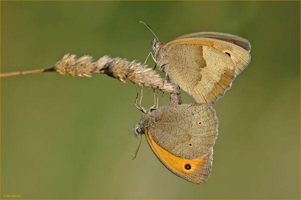 *Schmetterlinge ........ hochkonzentriert bei der Sache ;-) *