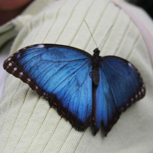 Schmetterlinge in der Halle auf Usedom