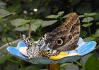 Schmetterlinge in Trassenheide