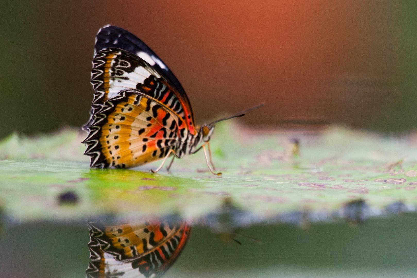 Schmetterlinge IV