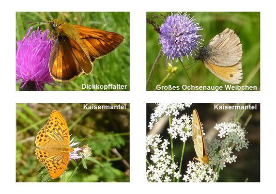 Schmetterlinge mit Namen