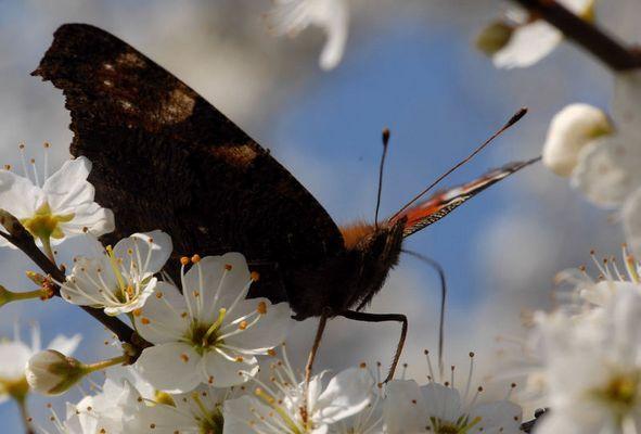 Schmetterlinge nicht nur im Bauch...