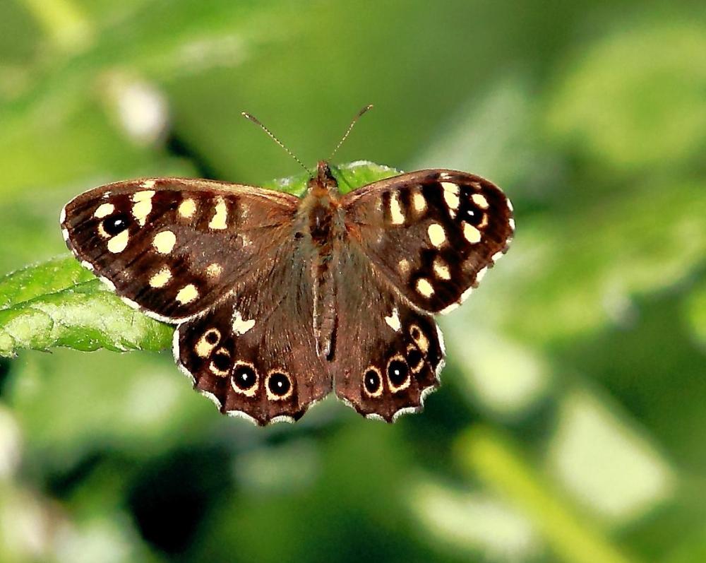 ...Schmetterlinge ..schön und filigran