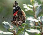 Schmetterlinge sehen von nah echt eckelig aus :D