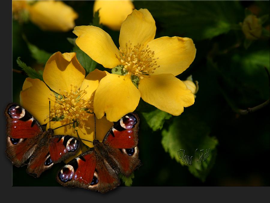 Schmetterlinge und Blümchen.....