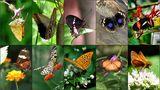 Schmetterlinge und Falter by Juan