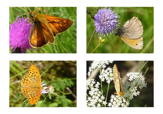Schmetterlinge unterwegs