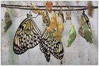 Schmetterlinge von der Stange