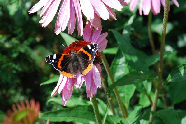 Schmetterlinge vorm Haus