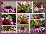 Schmetterlinge wo hin man sieht