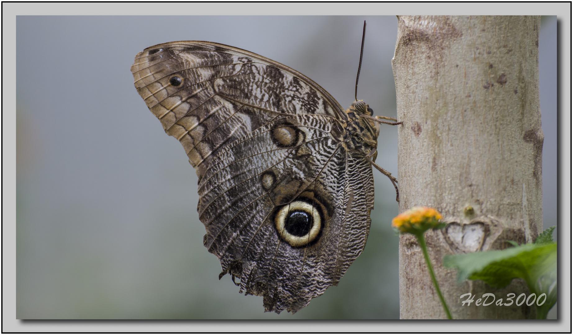 Schmetterlinge02