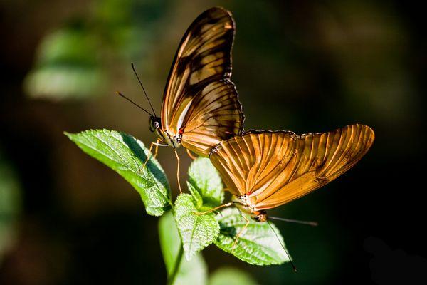 Schmetterlingen2